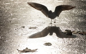 Snow and freezing hits uk: Birds stand on the frozen surface of the lake in London's Green Park
