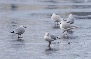Snow and freezing hits uk: Birds stand on the Grand Canal in Dublin