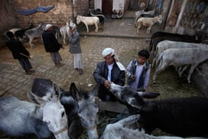 24 hours in pictures: A Yemeni man checks the age of a donkey displayed for sale