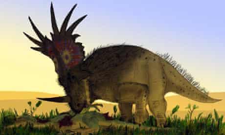 A bristly Styracosaurus dinosaur