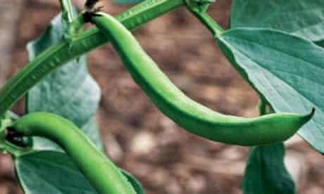 Alys Fowler: Broad beans