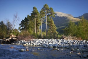 Wild Ennerdale forest: Joe Cornish, capturing the spirit and atmosphere