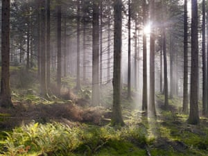 Wild Ennerdale forest: Photographer Joe Cornish, capturing the atmosphere of wilderness, Cumbria