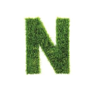 Alphabets book: Grass Letter N