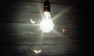 the moth radio head elisabeth mahoney