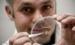 Bush cricket and its testes