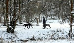 Snow today: A man walks his dogs  through the snow i
