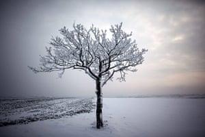 Week in wildlife: Snow in Germany