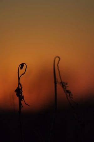 Desertification: UNCCD Photo Contest 2009 shortlisted