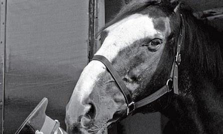 Sefton in 1984