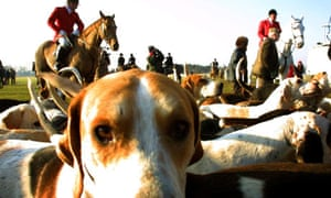 Hounds and huntsman gather before the start of a fox hunt in Higham, Suffolk, in 2001