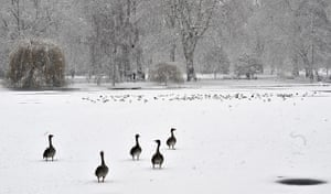 Cold weather continues: Ducks walk across the ice in a snowy St James's Park in London