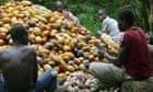 Ivory Coast Cocoa