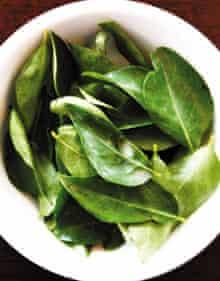 Daun Kari (curry leaves)