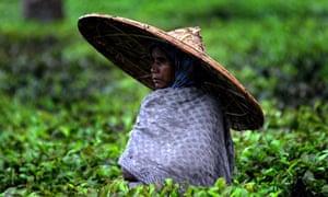 Assam tea garden labourer