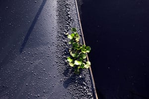 2010 year in environment: A small plant photographed growing on the evidently polluted water