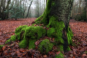 2010 year in environment: A cold, grey january day in Epping Forest