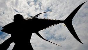 2010 year in environment: yellow fin tuna