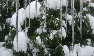 Icicles in south London on 3 December 2010. Photograph: Peter Walker