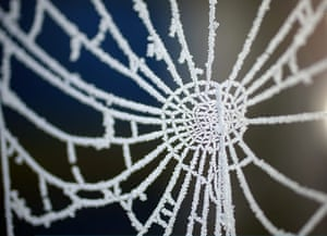 24 hours in pictures: Frost clings to a spider's web around Pickmere Lake