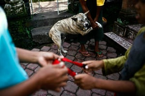 24 hours in pictures: An owner bringing his dog to be vaccinated during an outbreak of rabies