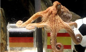 Paul the World Cup predicting 'psychic' octopus