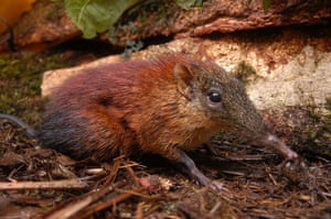 Decade Of Discovery: Roveroelephant-shrew