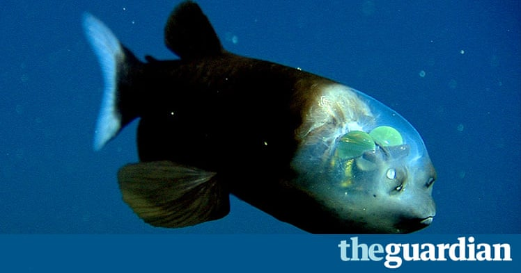 New species discovered in 2010 environment the guardian for 99 5 the fish