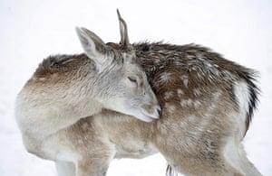 week in wildlife: Winter weather Dec 4th