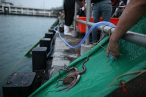 week in wildlife: An octopus is released by a group of Buddhists into Victoria harbour