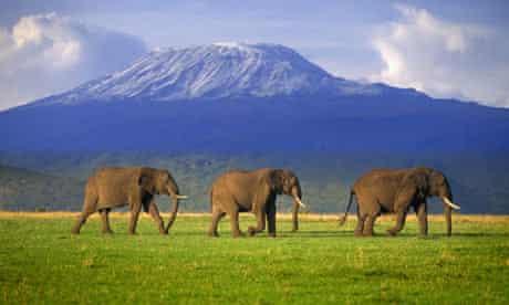 Elephants Walking Single File