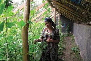 Tajikistan Climate: Tajikistan An Oxfam built solar greenhouse, Vose District, south Tajikistan