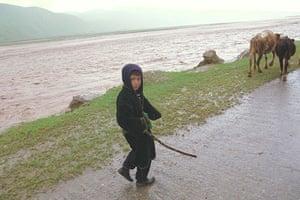 Tajikistan Climate: Young boy herding cattle to the fields Surhob river Tajikistan