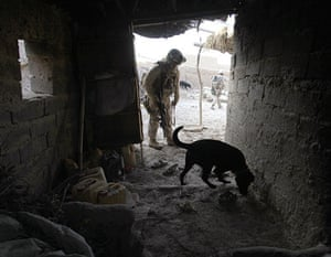 Operation Moshtarak: US Marines use dogs to search for explosives in Marjah