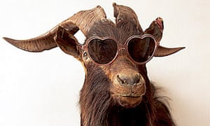 Homes blogs: animal in sunglasses