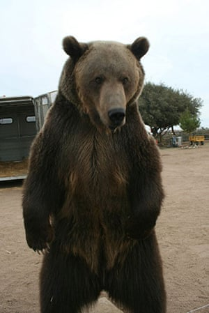 When animals kill: Rocky the grizzly bear at the Forever Wild animal sanctuary