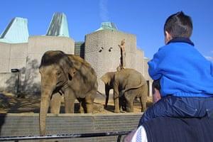 When animals kill: Elephants at London Zoo