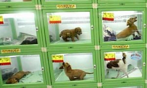 Puppies at a pet shop in Tokyo