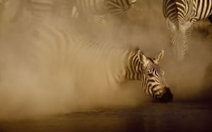 Great Rift Valley Kenya: Spectacular Pictures From Greg du Toit : A Zebra stallion