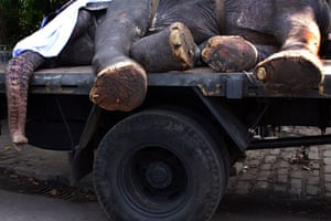24 hours: Burial of a temple elephant in Colombo, Sri Lanka