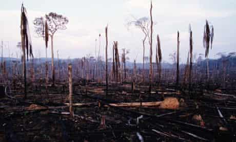 slash and burn forest