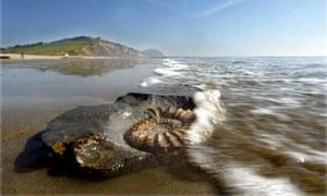 Jurassic coast Charmouth