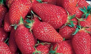 Plant of week: Strawberry 'gariguette'