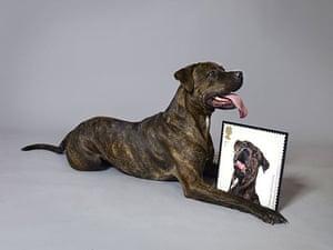 Battersea Dogs Home: Battersea Commemorative Stamps