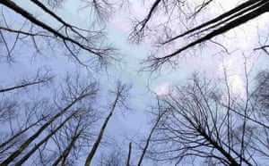 Week in wildlife: Leafless trees are seen in a marsh near the village of Sporovo