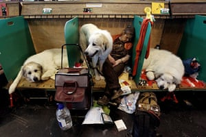 Crufts: Dogs And Owners Gather For 2010 Crufts Dog Show