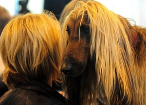 Crufts: Crufts 2010 A Afghan Hound with its owner