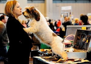 Crufts: Crufts 2010 A Basset Griffon Vendeen with its owner