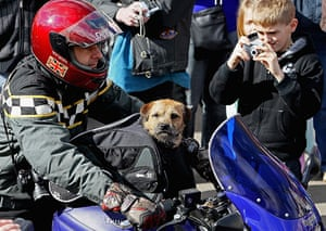 Wootton Bassett bikers: A dog joins some of the 10,000 bikers