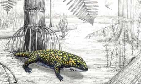 FedEx fossil amphibian Fedexia striegeli